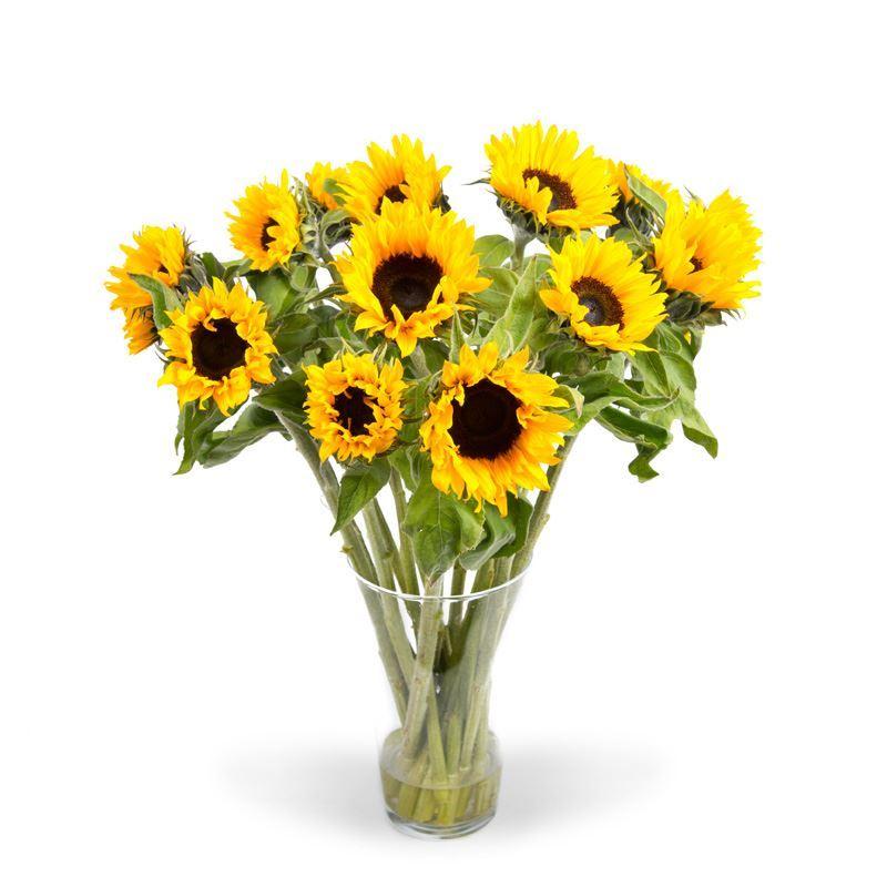 Zonnebloemen 12 stelen