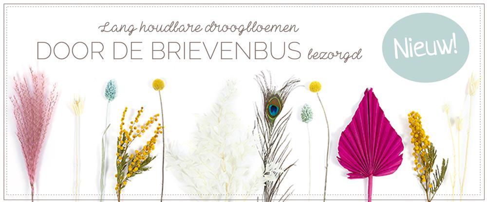 Banner Dry Flower Gift
