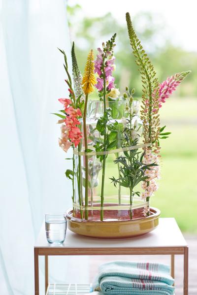 Eremurus zomerbloemen