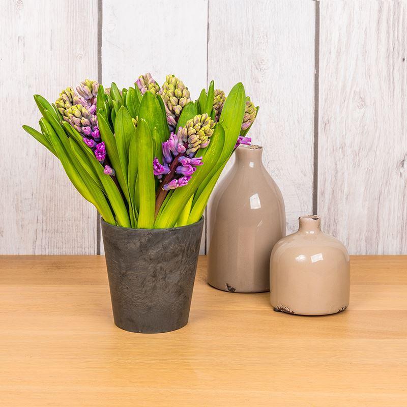 Hyacinten op tafel