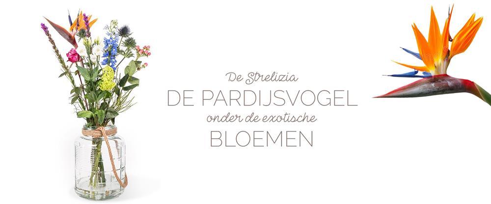 Strelizia Paradijsvogelbloem