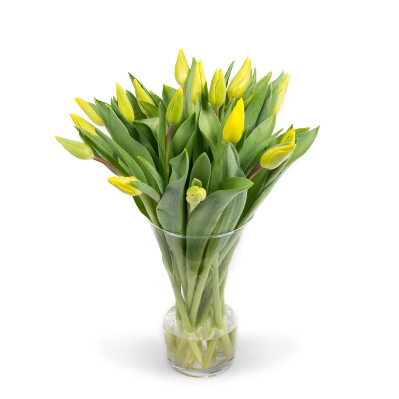 Tulpen geel in vaas