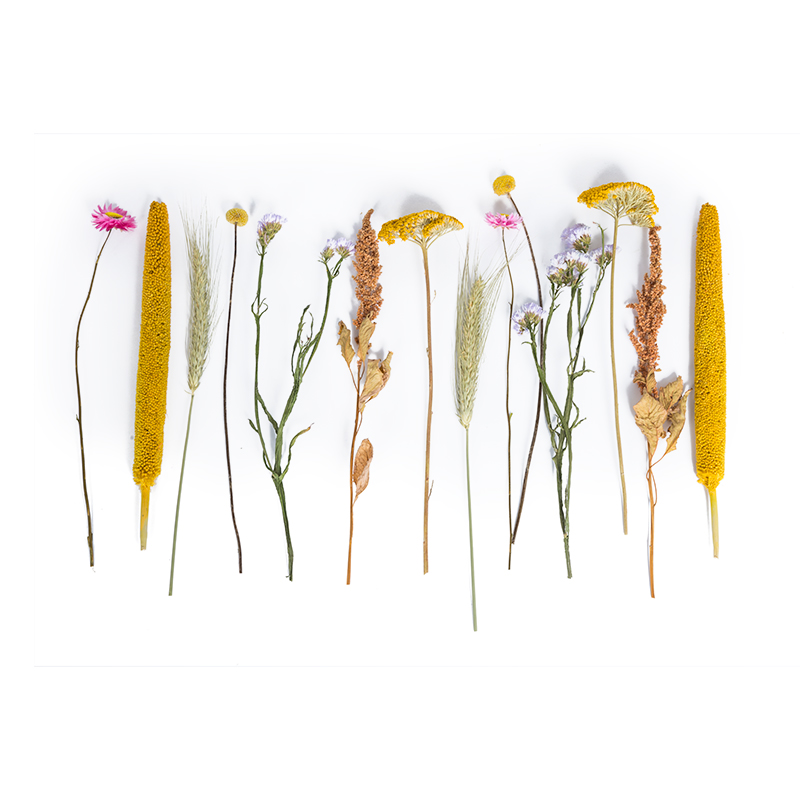 Droogbloemen apart op tafel