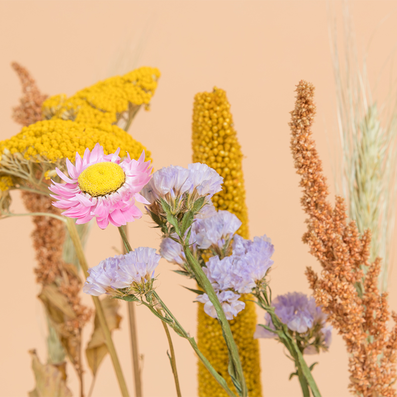 Dry Flower Gift